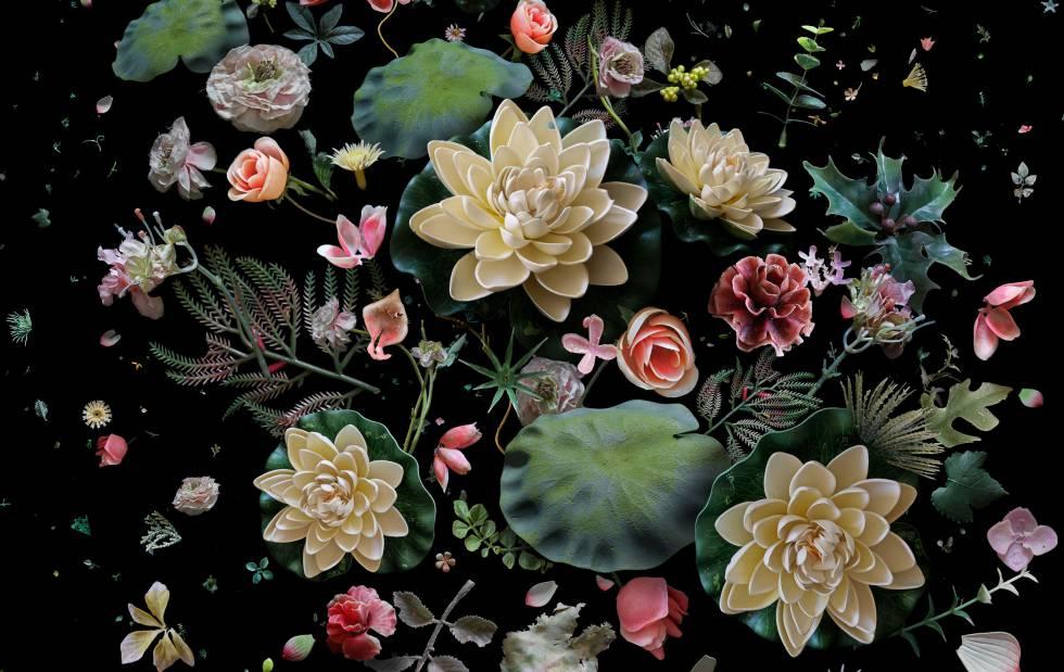Imagen de referencia de Botánica