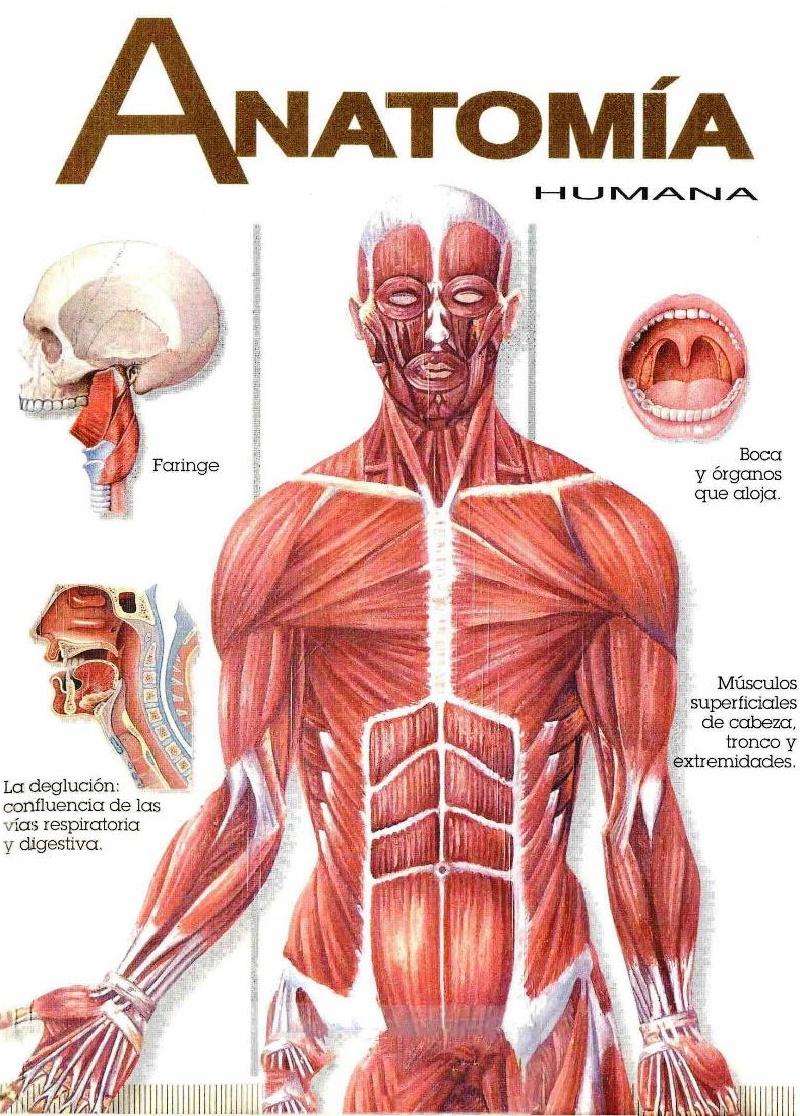 Imagen de referencia de anatomia