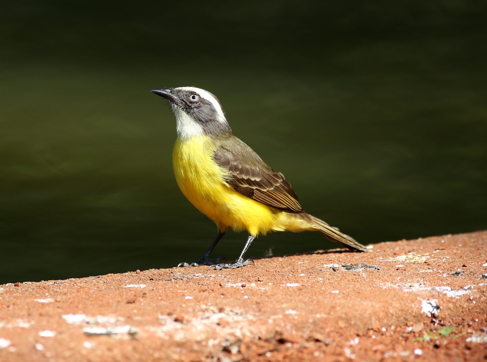 """Imagen de referencia de Sobre """"Estaba la pájara pinta sentada en el verde limón"""" de Albalucía Ángel"""