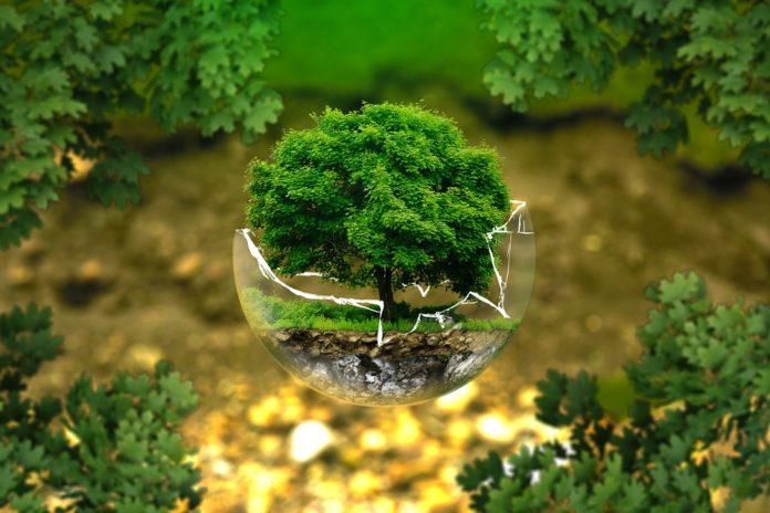 Imagen de referencia de estudio Ambiental.